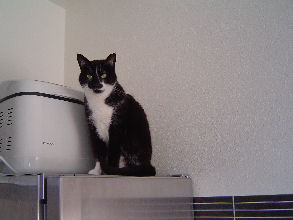 01-02-09-mioche-et-cie-01.jpg