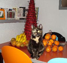 03-01-08-choupette-01.jpg