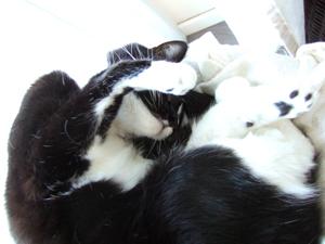 03-02-13-slumcat-nuscule-03.jpg