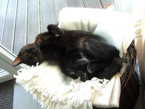 03-02-13-slumcat-nuscule-04.jpg