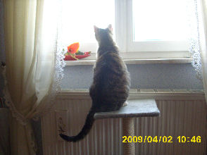 03-04-09-tigrou-02.jpg