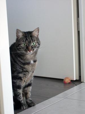 03-12-12-slumcat-et-nuscule-02.jpg