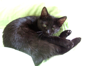 03-12-12-slumcat-et-nuscule-03.jpg