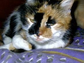 04-08-08-koraille-abuela-02.jpg