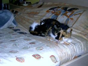 05-02-08-koraille-abuela-01.jpg