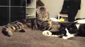 06-02-11-slumcat-01.jpg