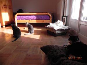 06-11-12-gripsou-et-cie-05.jpg