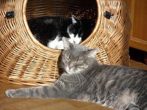 06-11-12-gripsou-et-cie-10.jpg