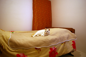 09-11-12-samoa-04.jpg