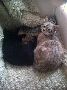 11-04-13-le-trio-des-filles-en-pleine-sieste.jpg