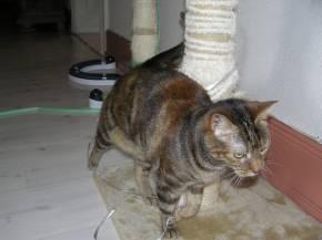 11-05-11-titsia-04.jpg