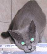 11-11-2006-adoption-inaya-1.jpg