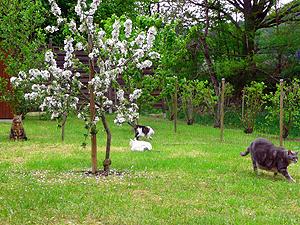 12-05-13-molbi-guarguantua-12.jpg