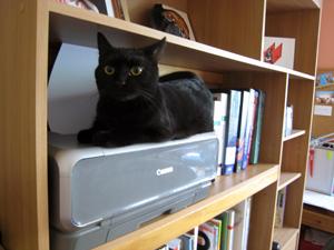 12-10-12-x-cat-01.jpg