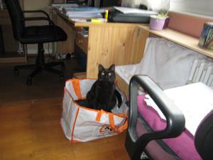 12-10-12-x-cat-02.jpg