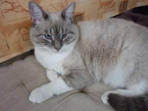 14-02-11-canelle-galapagos-zafira-03.jpg
