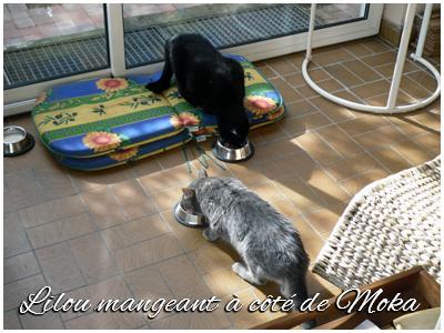 14-05-12-lilou-08-069.jpg
