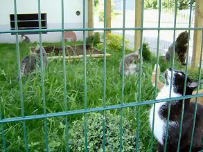 15-06-09-mioche-et-cie-04.jpg