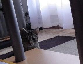 16-11-2010-1000feux-04.jpg