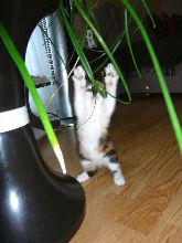 17-09-2007-lubie-03.jpg