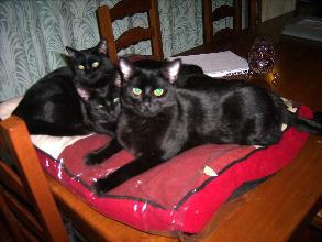 19-02-09-hugues-lady-phil-01.jpg