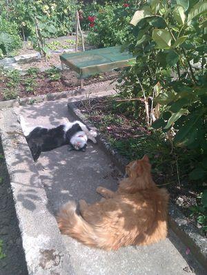 19-03-12-clarence-x-cat-02-3.jpg
