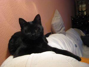 19-03-12-x-cat-01-1.jpg
