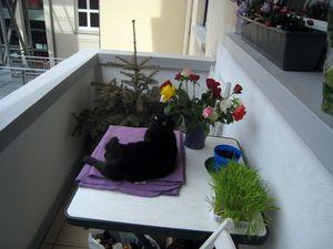 19-03-12-x-cat-02-1.jpg