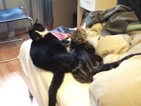 20-02-11-slumcat-01.jpg