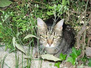 22-07-07-tigrette-02.jpg
