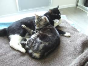 23-03-11-slumcat-01.jpg