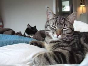 23-03-11-slumcat-02.jpg