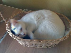 26-12-11-diavolo-04.jpg