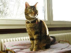 27-12-09-titsia-03.jpg