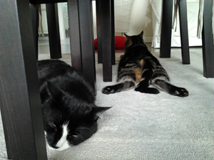 29-07-12-slumcat-02.jpg