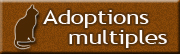 Adoptions multiples