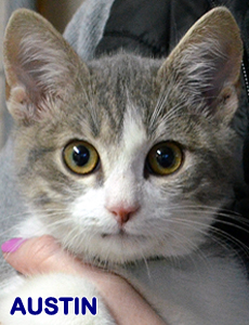 Austin adoption