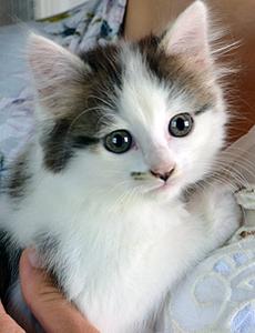 Bibou adoption