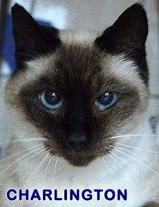 Charlington adoption