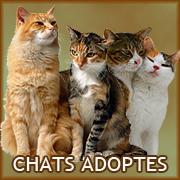Chats adoptes