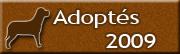 Chiens adoptés en 2009