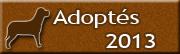 Chiens adoptés en 2013