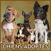 Chiens adoptes