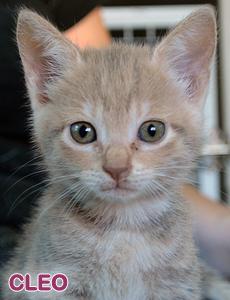 Cleo adoption