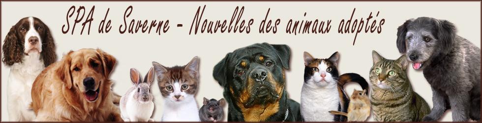 SPA de Saverne : nouvelles des animaux adoptés : chats, chiens, NACS