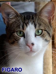 Figaro adoption