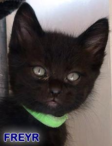 Freyr adoption
