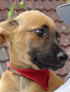 Frimouse chiot 200718 3