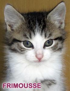 Frimousse adoption 3