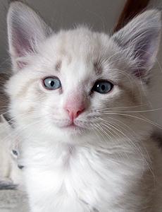 Galice adoption 1